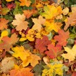 Colorful background of fallen autumn leaves — Stock Photo #14964045