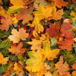 Colorful background of fallen autumn leaves — Photo #14964097
