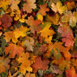 Colorful background of fallen autumn leaves - Stock Photo