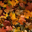 Photo: Colorful background of fallen autumn leaves