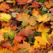 Stockfoto: Colorful background of fallen autumn leaves