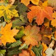 Colorful background of fallen autumn leaves — Foto de Stock   #14964229