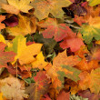 Colorful background of fallen autumn leaves — Stockfoto