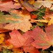 Colorful background of fallen autumn leaves — Photo #14964319