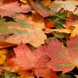 Colorful background of fallen autumn leaves — Stock Photo #14964319