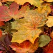 Colorful background of fallen autumn leaves — Photo