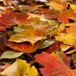 Foto Stock: Colorful background of fallen autumn leaves
