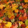 Colorful background of fallen autumn leaves — Stok fotoğraf #14964415