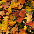Colorful background of fallen autumn leaves — Stock Photo #14964447