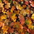 Colorful background of fallen autumn leaves — Stock Photo #14964493