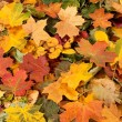 Autumn — Stock Photo #14965063