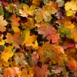 Autumn — Stock Photo #14965253