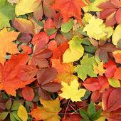 красочный осенний фон — Стоковое фото