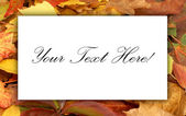 Colorful autumn background — Stock Photo