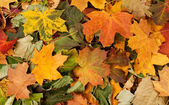 Colorful background of fallen autumn leaves — Stock Photo