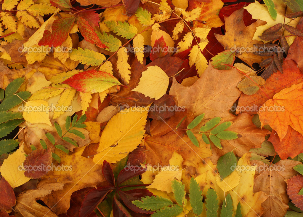 Colorful background of fallen autumn leaves   — Stock Photo #14963059
