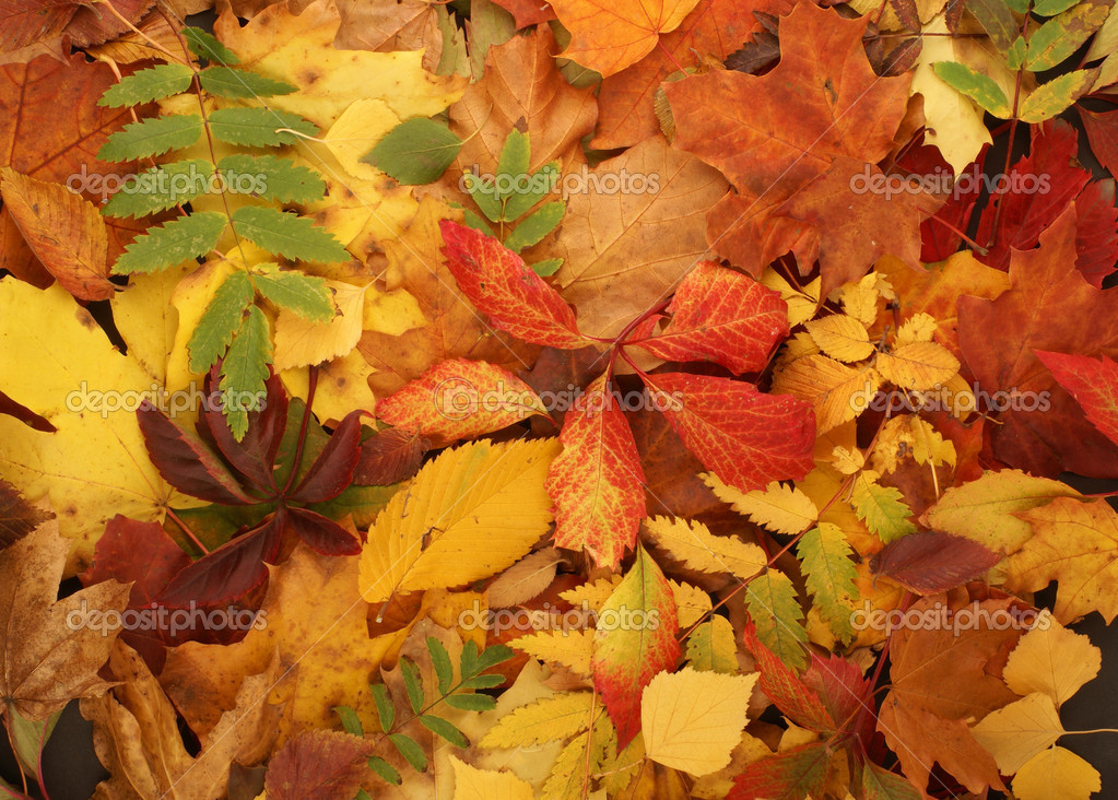 Colorful background of fallen autumn leaves   — Stock Photo #14963083