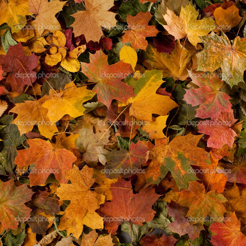 Colorful background of fallen autumn leaves — Photo #14964129