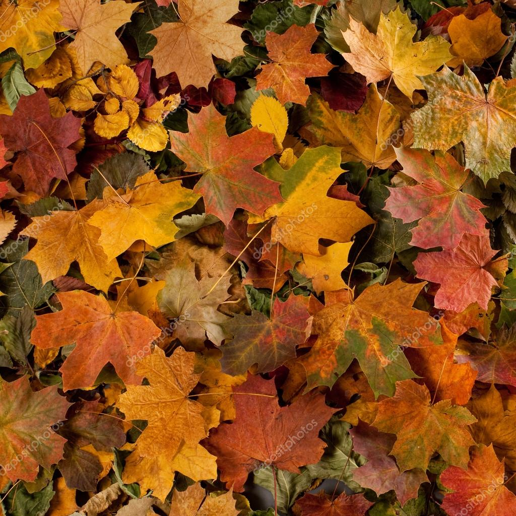 Colorful background of fallen autumn leaves  Foto Stock #14964129