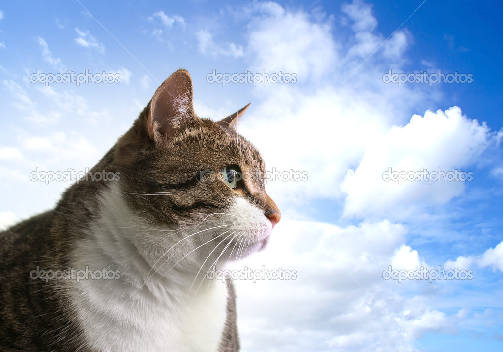 Head of big fat cat over sky background        — Стоковая фотография #14986449