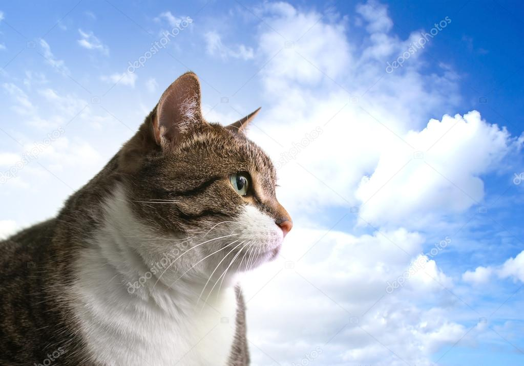 Head of big fat cat over sky background         Stockfoto #14986449