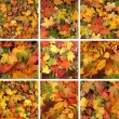 Colorful background of fallen autumn leaves — Stock Photo #15041603