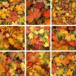 Colorful background of fallen autumn leaves — Stock Photo #15041725