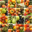 Collage made of many images of different fruits and vegetables — Stock Photo #15365227