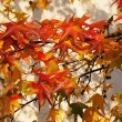 Autumn background — Stok Fotoğraf #15381325