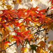 Autumn background — Foto de stock #15381325