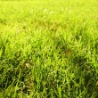 Close-up view of the green grass - Stock Photo