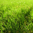 Close-up view of the green grass — Stock Photo