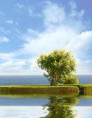 Tree over sky — Stock Photo