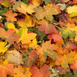 Colorful background of autumn leaves — Stockfoto