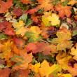 Royalty-Free Stock Photo: Colorful background of autumn leaves