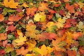 Färgstarka bakgrund av höstlöv — Stockfoto