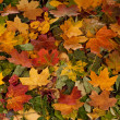 Colorful background of fallen autumn leaves — Stock Photo #15435363