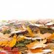Colorful background of autumn leaves - ストック写真