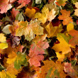 colorful background of autumn leaves — Stock Photo