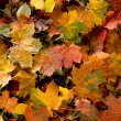 Colorful background of autumn leaves — ストック写真