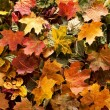 Colorful background of autumn leaves — Stock Photo #15435457