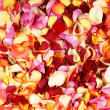 Bright fractal background made of many petals - Foto Stock