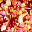 Bright fractal background made of many petals — Stock Photo