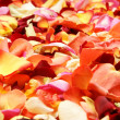Bright spa background with a lot of different petals - Stock Photo