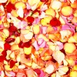Stock Photo: Bright spbackground with lot of different petals