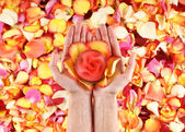 Beautiful hands with the flower petals — Stock Photo