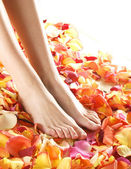 Beautiful legs with the flower petals — Stock Photo
