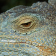 Eye of the chameleon - Stockfoto