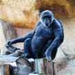 Monkey in the zoo - Photo