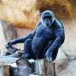 Monkey in the zoo - Stock Photo